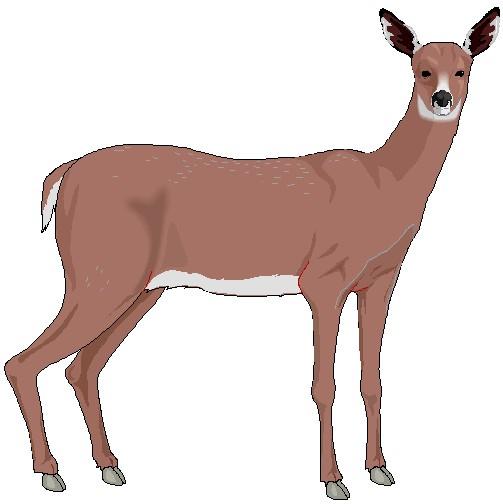 Buck Clip Art Deer.jpg 33.20 kb